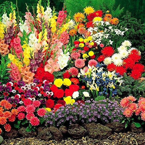 bulbes-de-jardin-periode-dete-100-bulbes-de-fleurs
