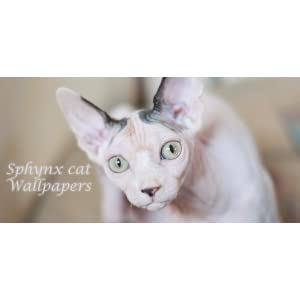 Sphynx Cat Wallpapers Amazonde Apps Für Android