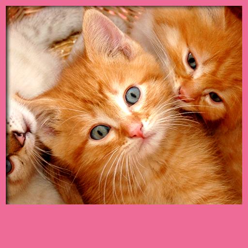 fonds-decran-live-chatons