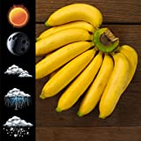 Widget Meteo Banana