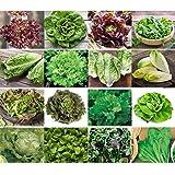 Salladsset 16 x 100 frön 100 % naturliga, handplockade från Portugal, sällsynta och gamla sorter av sallad, hög grodd. Sallad