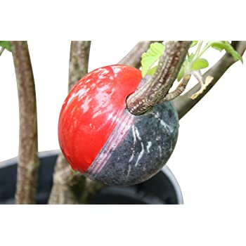 Cutting Globe Plant Propagator 11 Piece Set - Grow Roots on Plant Cuttings in as few as 8 weeks - Propagate Trees, Shrubs, Roses, Climbers & More - Add Rooting Hormone, Roots Grow on Growing Plant