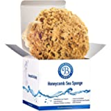 Jordan Benedict Natural Sea Sponge - Unbleached Durable Natural Honeycomb Sea Sponge for Bathing, Shower, Exfoliating…