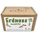 Growbro Kids - Juego de cultivo de cacahuete para el jardín