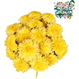 Rose Bazaar Sevanthi Flower Box - 500g (Mixed)