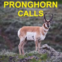 Pronghorn Hunting Calls