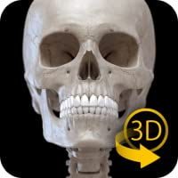 Skelettsystem - 3D Anatomie