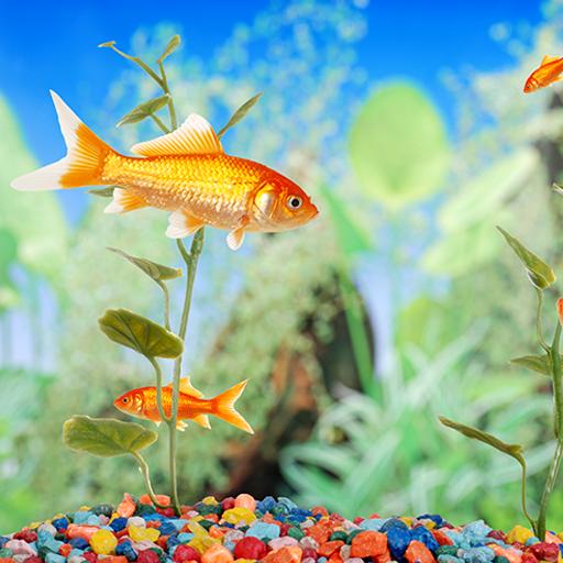Aquarium Live Wallpapers (Schalen Fisch Aquarium)