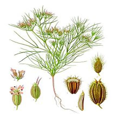 benefits-of-cumin-seeds