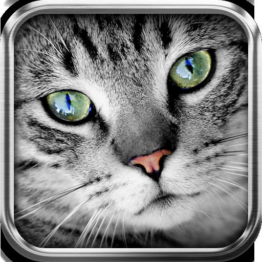 Übersetzer für Kat App-übersetzer