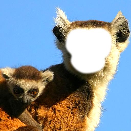 Divertente Scimmia Photo Montage
