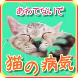 猫の病気と手当てクイズ〜猫の病気の知識あつめました!  1