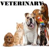 Veterinary...