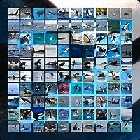 Orca Wallpaper App
