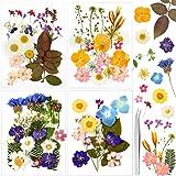 Auihiay 90 pièces vraie fleur séchée pour résine 25 sortes de fleurs pressées naturelles feuilles pour bougie ongles artisana