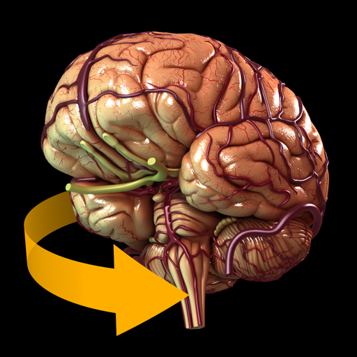 Brain - 3D Atlas of Anatomy: Amazon.de: Apps für Android