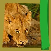 Wild Animals Photo Editor