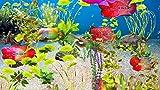 Fleur corne Aquarium [Téléchargement]