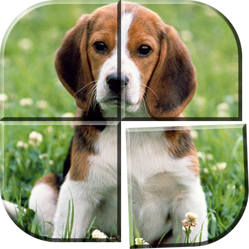 Hunde Spiele Anmelden Kostenlos