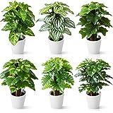 CROSOFMI Fausse Plantes Artificielles Interieur avec Pot Plastique 24 cm Mini Fausse Plante Maison Balcon Salon Chambre Verte