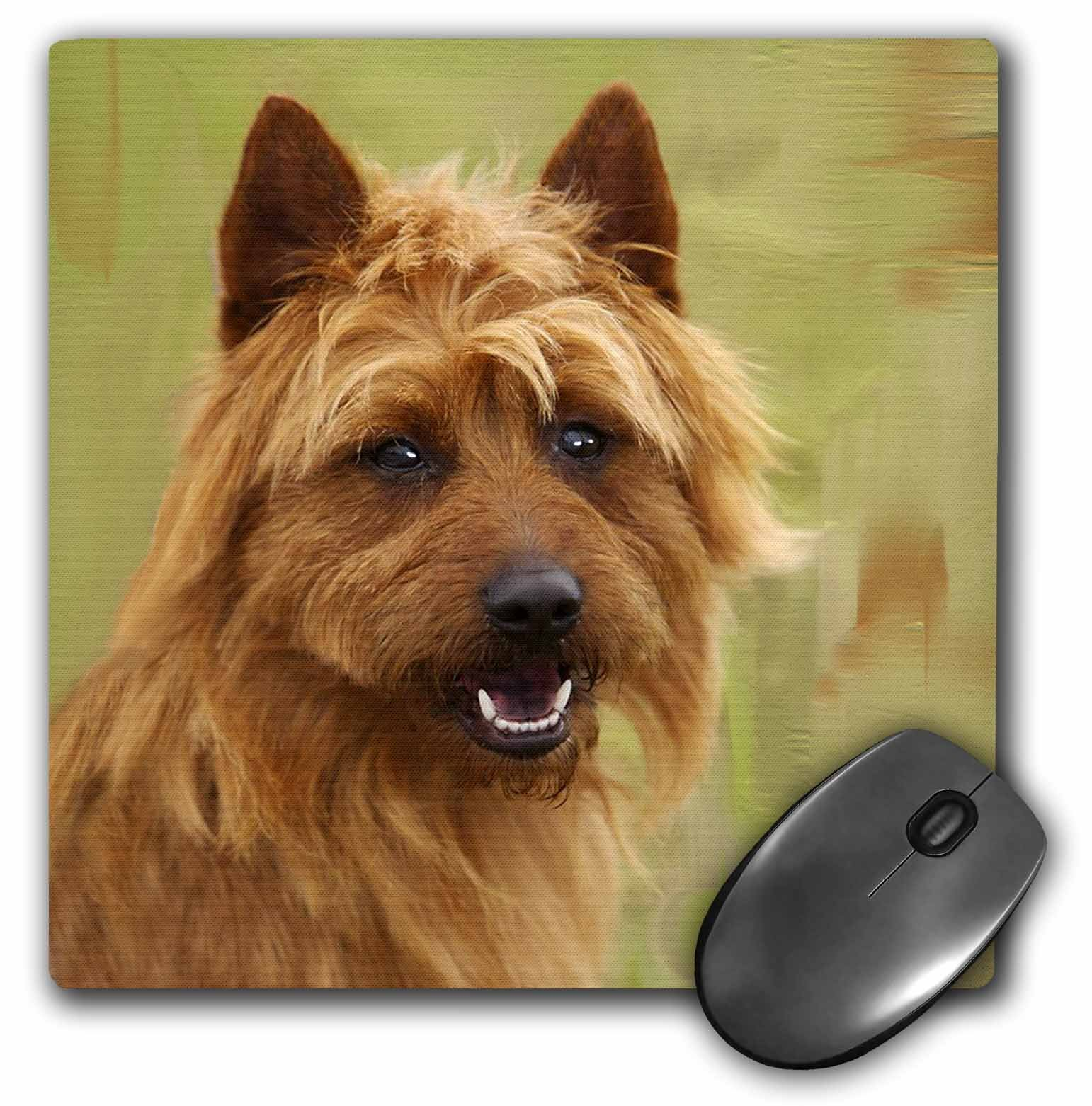 3dRose mp_4260_1 8 x 8-Inch Australian Terrier Mouse Pad