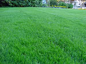 5 kg EXTREME SHADE DROUGHT RESISTANT LAWN SEED with KENTUCKY BLUEGRASS DRY SOIL