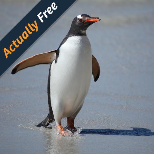 wild-animals-of-antarctica