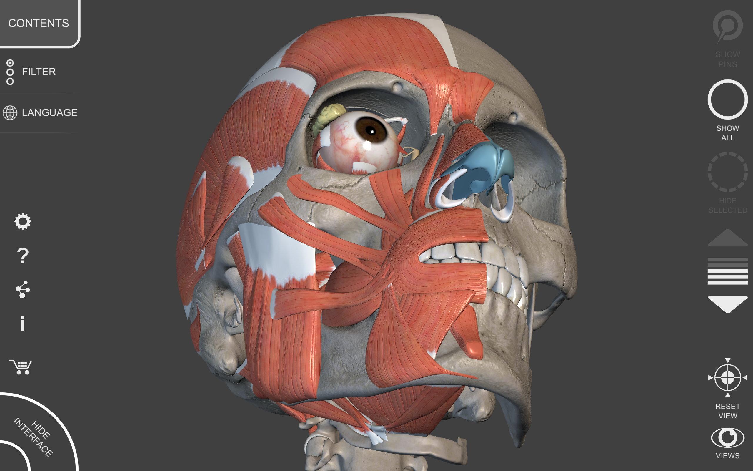 Muscular System 3d Atlas Of Anatomy Amazon Co Uk