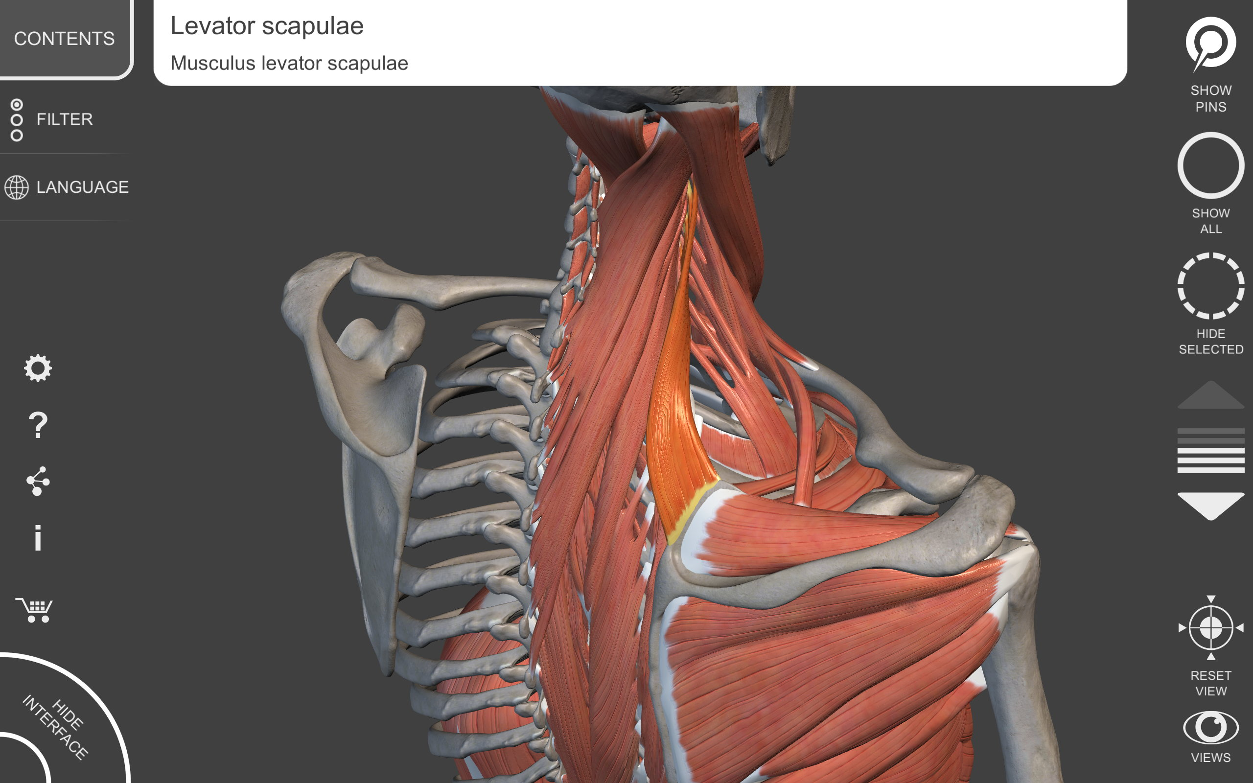 Muskelapparat - 3D Anatomie: Amazon.de: Apps für Android