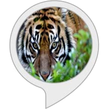 Tigergeräusche