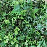 Kunstheg, verticaal, voor de muur in de tuin. Saltus Groen