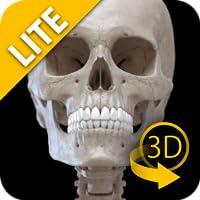 Skelettsystem 3D - Lite