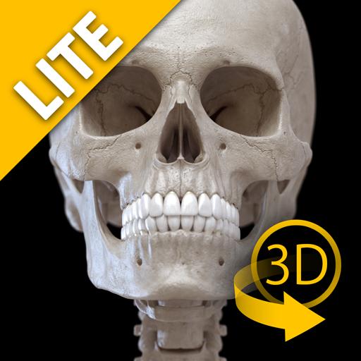 Sistema Scheletrico 3D - Lite