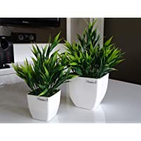 Planters Artificial Plant with Plastic Pot (Green, White, 2 Piece)