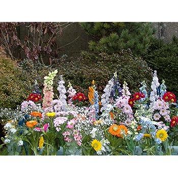 Inter Home TAPIS DE FLEURS - JARDIN PARC JARDINERIE - 30 variétés et ...