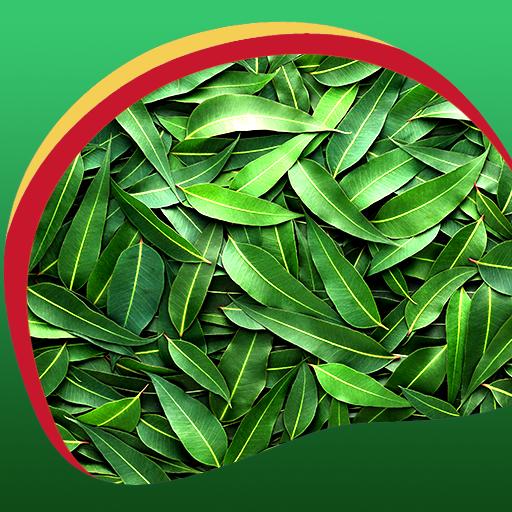 Leaf Live Wallpapers (Live-leaf)