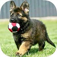 German Shepherd Puppy Training Made Easy - Best Guide & Tips For Beginners