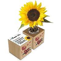 Eco-Woody   Regalo ecologico e sostenibile Festa della Mamma   Cubo di legno magnetico con semi di Girasole   Kit per la…