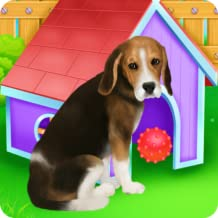 Beagle Puppy Day Care