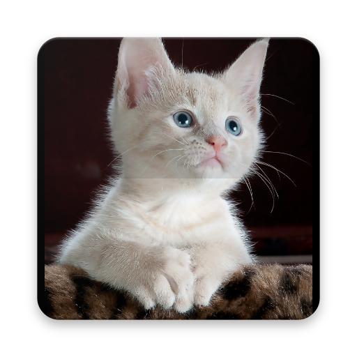 Cute Cat Wallpaper Amazon Fr Appstore Pour Android