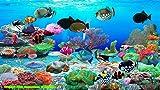 Trigger-Fisch-Aquarium [Download]