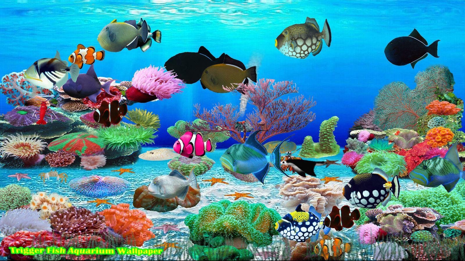 Trigger Fisch Bildschirmschoner [Download]