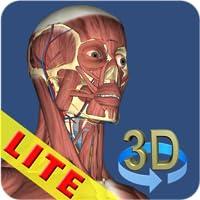 3D Anatomy Lite