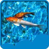 Hintergrundbilder von Koi Fish