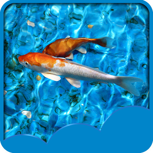 fonds-decran-koi-fish-live