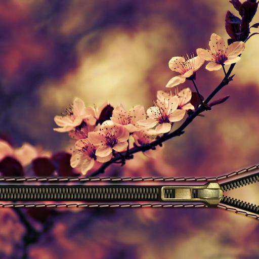 Sakura Zipper Lock : Pink Sakura Lock Screen