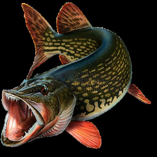 journal-de-peche-des-poissons-version-gratuite