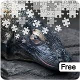 Dangerous Animals Jigsaw Puzzles