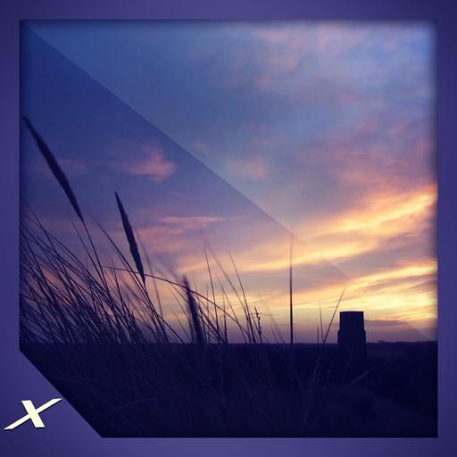 Grass Reeds Sunset