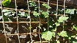 Floranica® Pérgola, Enrejado de Sauce impregnada y Cuerda de Yute ...
